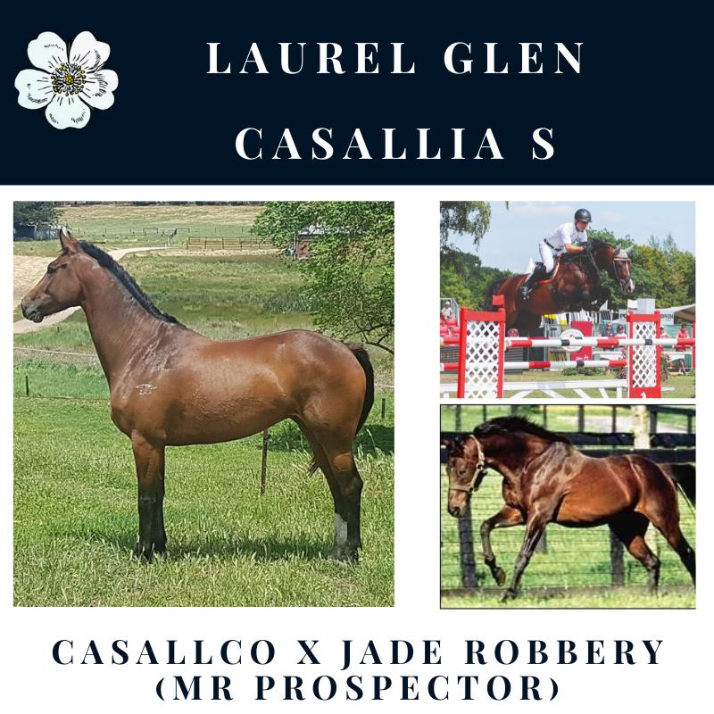 Laurel Glen Casallia S.png