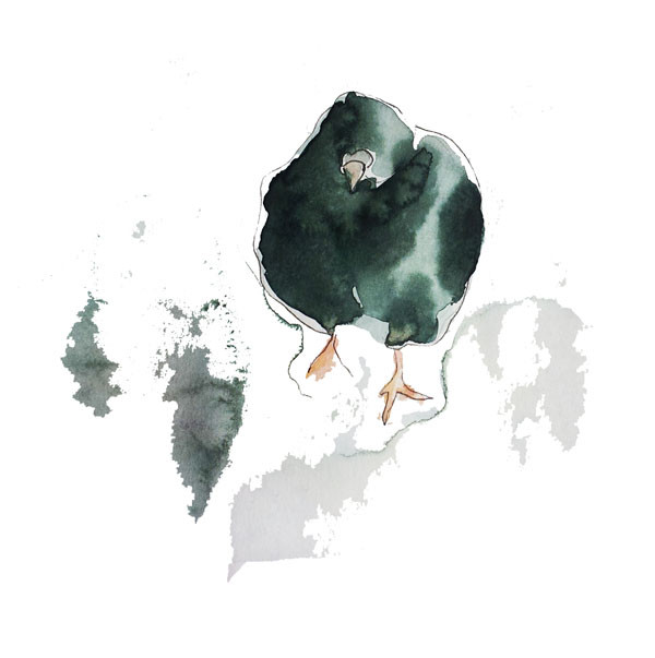 Pigeon friend