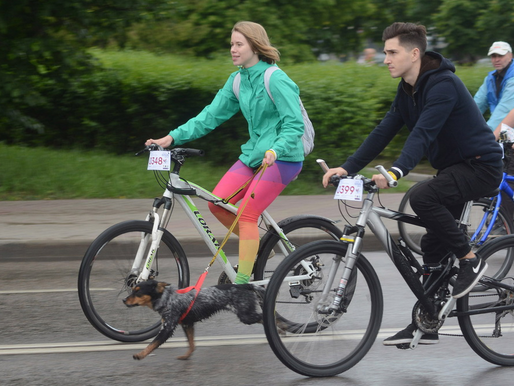 Участники липецкого велопарада примут участие в квесте и помогут животным