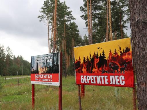 Липецкая область – в числе лучших регионов по управлению лесным хозяйством