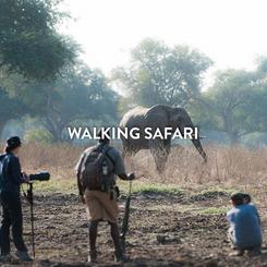 WALKING SAFARI.png