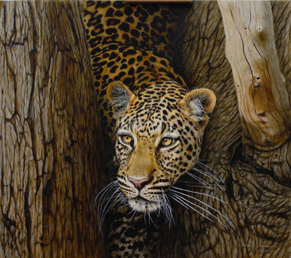 Is It Safe Leopard