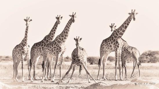 Botswana 2016_20160503_155016.jpg