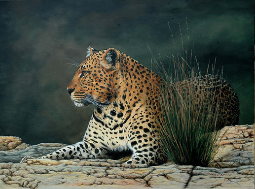 Morning Dreamer Leopard