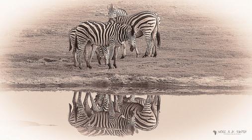 Botswana 2011_20110914_075900-2.jpg
