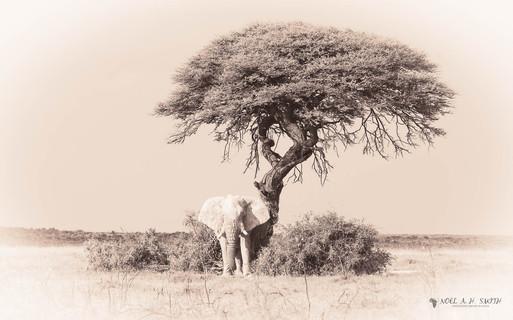 Namibia 2015_20150509_161126.jpg