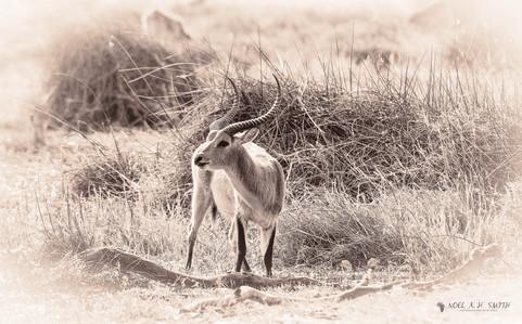 Botswana 2016_20160910-152753.jpg