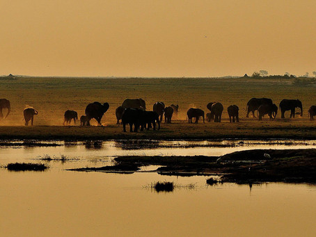 Africa Dreaming