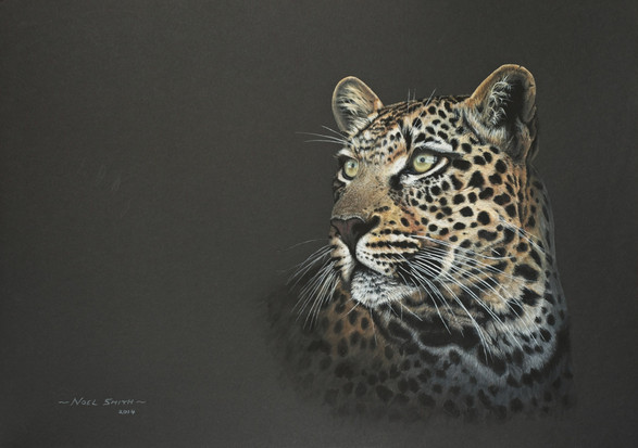 Day Dreaming Leopard
