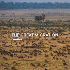 THE GREAT MIGRATION.png
