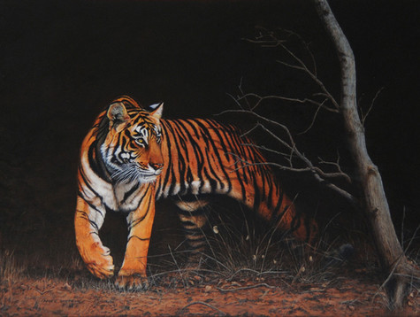 Into The Light Ranthambore Tiger