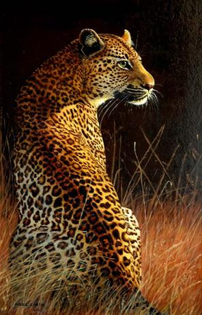 Dawn Patrol Leopard