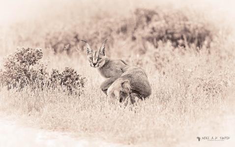 Central Kalahari_20140404_101902_01.jpg