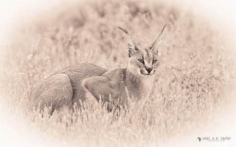 Central Kalahari_20140404_101832.jpg
