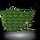 Thumbnail: Green Zebra