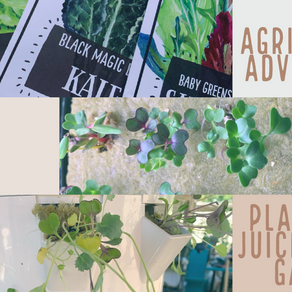Agriscaping Week 17 - Planting a Juice+ Tower Garden