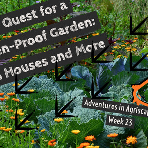 Agriscaping Week 23 - The Quest for a Chicken-Proof Garden: Hoop Houses and More