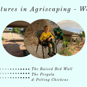 Agriscaping Week 19 - The Raised Bed Wall, the Pergola, and Petting Chickens