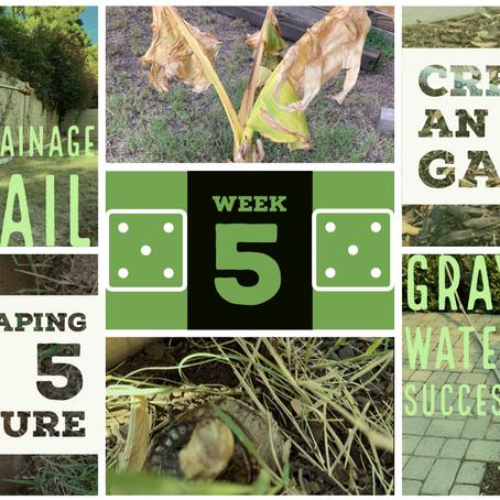 FAB 5 Week 5 - Drainage Fail & Graywater Success