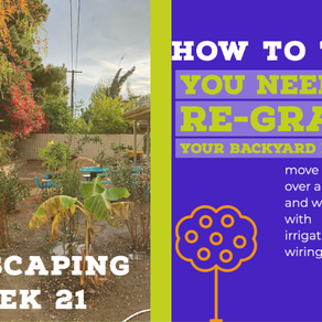 Agriscaping Week 21 - How to Tell You Need to Re-Grade Your Backyard Project