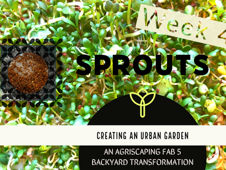 Agriscaping Week 4 - Sprout This!