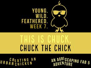 FAB 5 Week 7 - Meet Chuck.  Chuck the Chick.