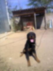 алекс аркадьев игрушки из чугуна собака пацан ротвейлер