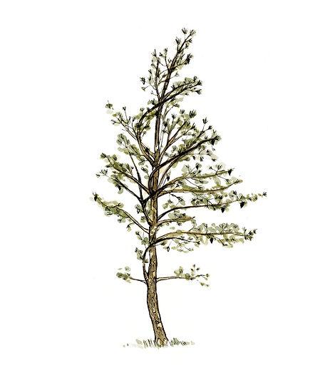 pinetree_letter size_2_edited.jpg