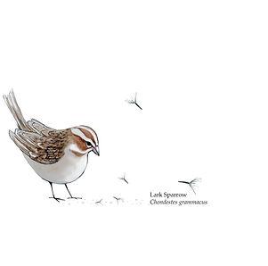 seedandsparrow_watercolour_with seeds.jpg