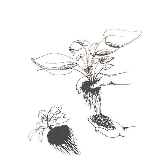 dividing plants_drawing.jpg