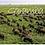 Thumbnail: Garamba: Conservation in Peace & War
