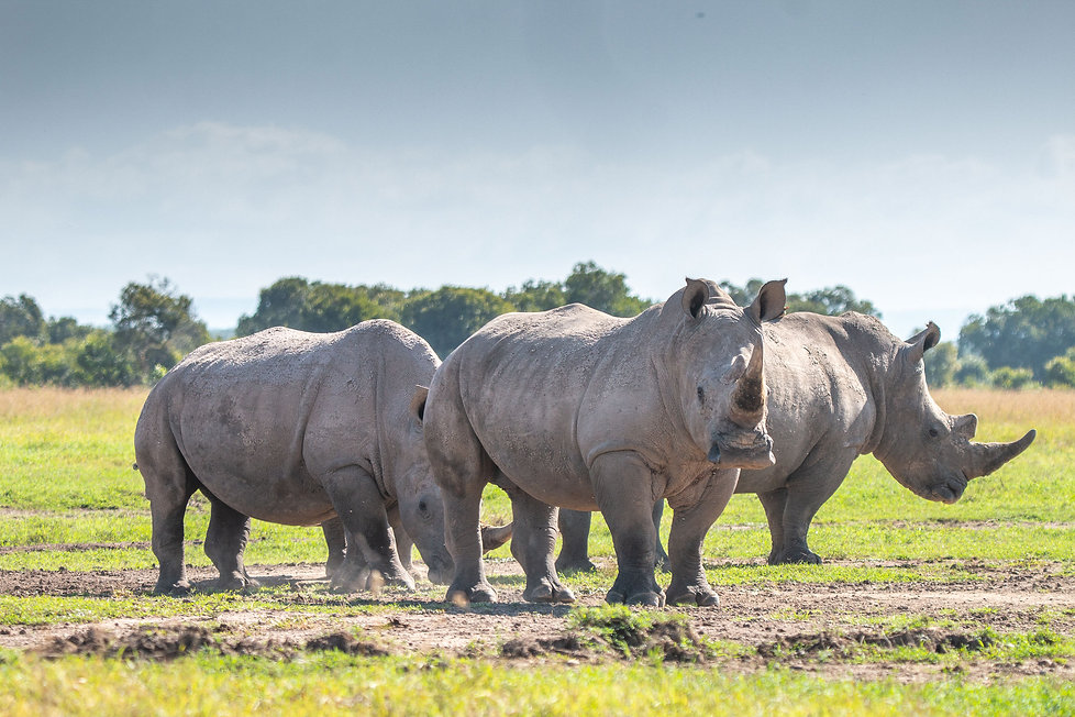 AdventureforRhinosDay4-11.jpg