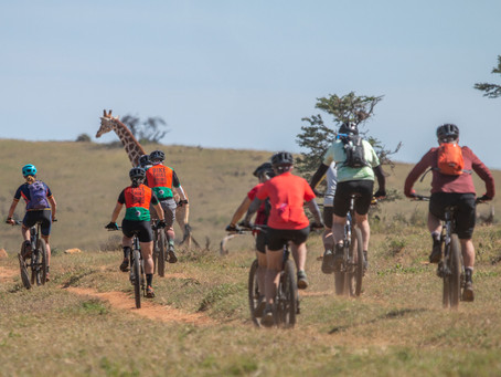Riding next to giraffes.