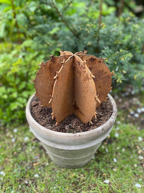 Edelrost - Kaktus rund