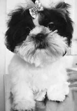 cliente Pet - paciente - animal natural - an 14