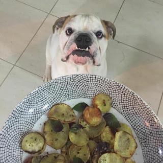 Posso oferecer comida para o meu Cão?  A resposta é SIM, mas cuidado...