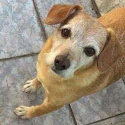 cliente Pet - paciente - animal natural - an 23