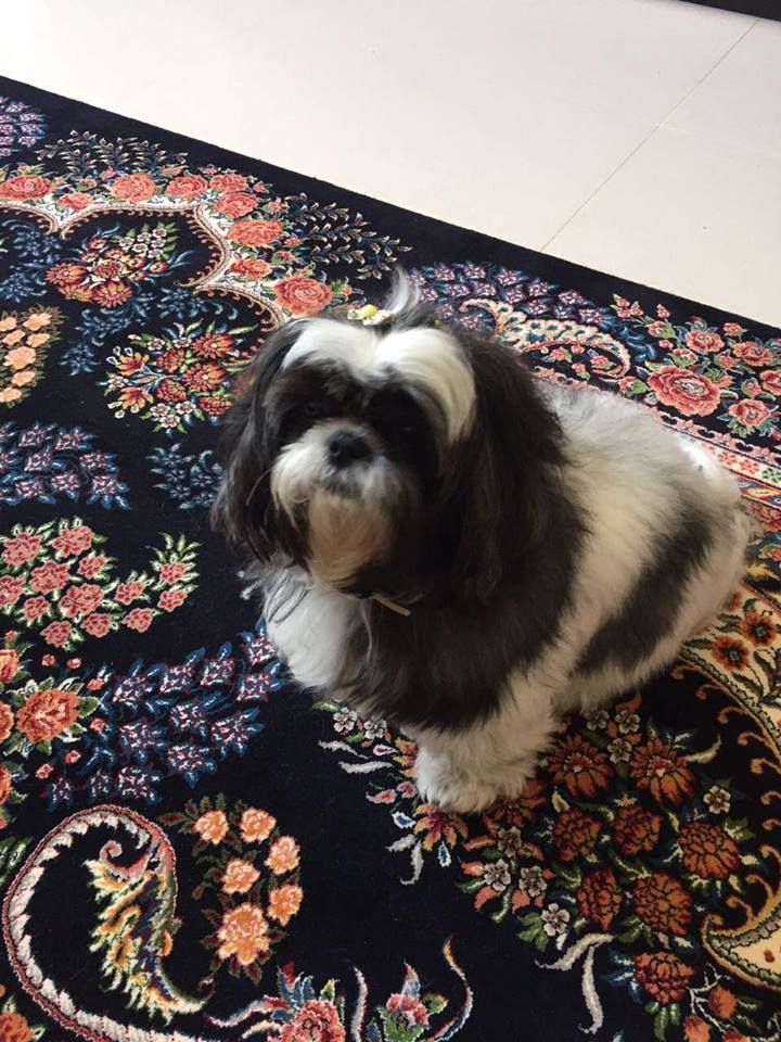 cliente Pet - paciente - animal natural - an 3