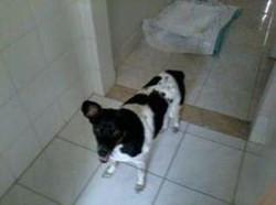 cliente Pet - paciente - animal natural - an 27