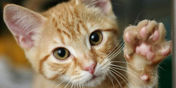 gatos 3.jpeg