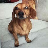 cliente Pet - paciente - animal natural - an 16