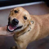 cliente Pet - paciente - animal natural - an 10