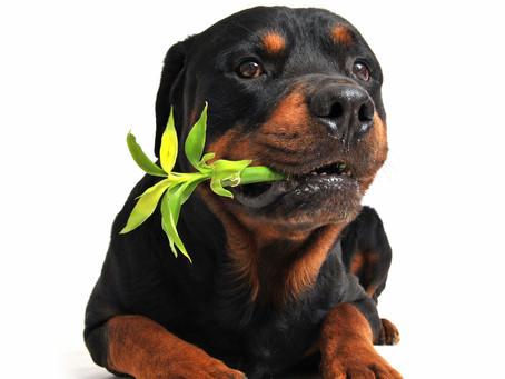 PLANTAS QUE FAZEM MAL AOS ANIMAIS DE ESTIMAÇÃO