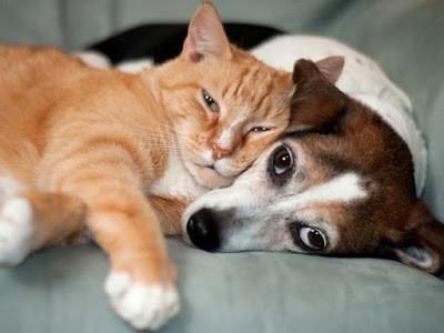 Como estimular a amizade entre cães e gatos