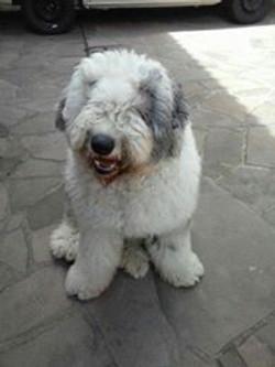 cliente Pet - paciente - animal natural - an 19
