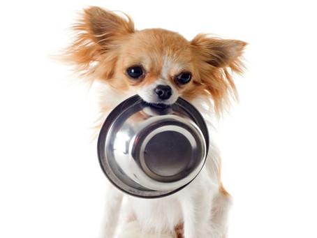 VOCÊ É O PRINCIPAL RESPONSÁVEL PELA SAÚDE DO SEU PET! IMPORTÂNCIA DA NUTRIÇÃO NA EXPRESSÃO DE GENES