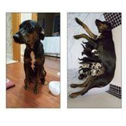 cliente Pet - paciente - animal natural - an 5