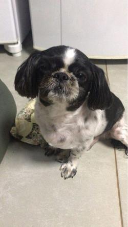 cliente Pet - paciente - animal natural - an 34