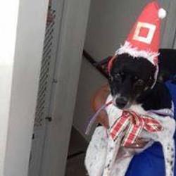cliente Pet - paciente - animal natural - an 25