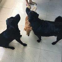 cliente Pet - paciente - animal natural - an 24